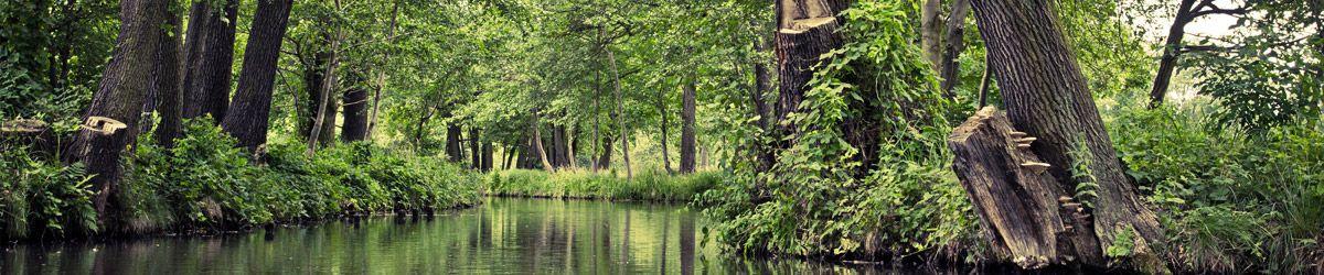 Grüne Landschaft mit Bach