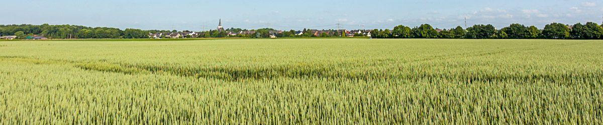 Feld mit Weizen im Hintergrund Stadt