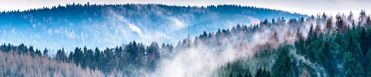 Baumwipfel im Nebel