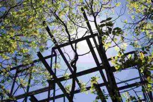 Grüne Äste mit Gerüststruktur vor blauem Himmel
